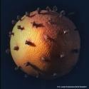 Virus oder Apfelsine mit Nelken?