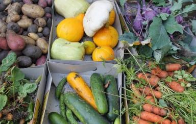 Der Kräuter- und Sinnesgarten im St. Joseph Krankenhaus brachte wieder eine reiche Ernte